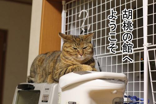 IMG_3186のコピー.jpg